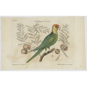 After Mark Catesby