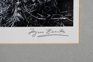 Fergus Bourke