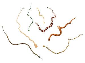 Seven Folk Art Snakes