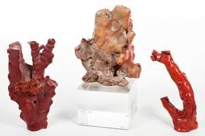 Three Coral Specimens