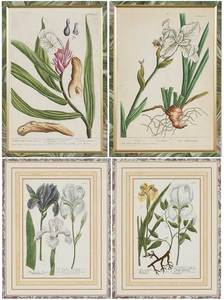 Four Botanical Engravings