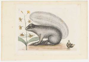 Mark Catesby
