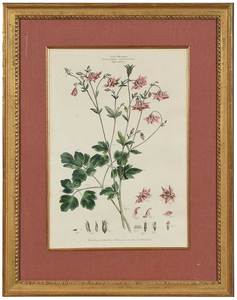 Three Botanical Engravings, Brookshaw, Miller
