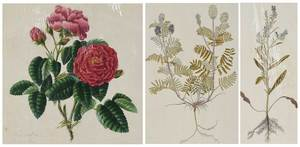 Three Botanical Prints