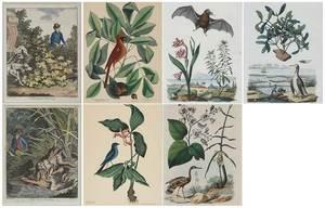 Seven Decorative Prints