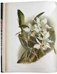 Reichenbachia: Orchids Illustrated and Described