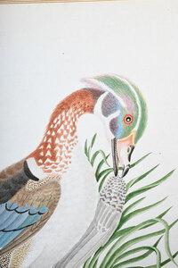 Rare John Abbot Watercolor