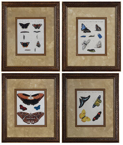 Four Butterfly and Moth Prints