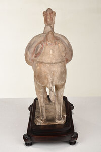 Chinese Terracotta Sculpture of a Bactrian Camel